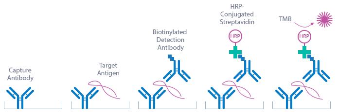 Human Periostin ELISA kit assay priniciple