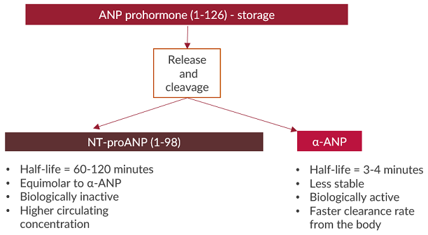 NT-proANP ELISA Product overview