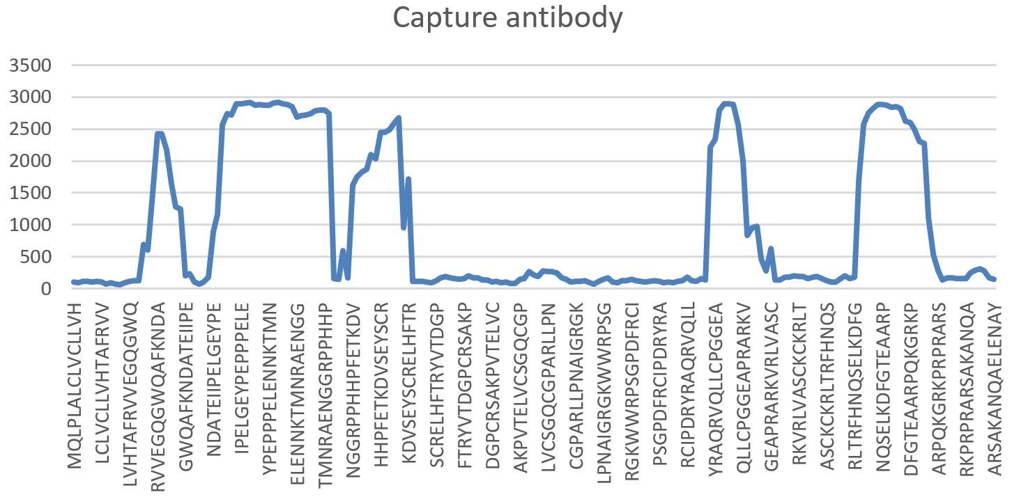 specificity of the Sclerostin ELISA capture antibody